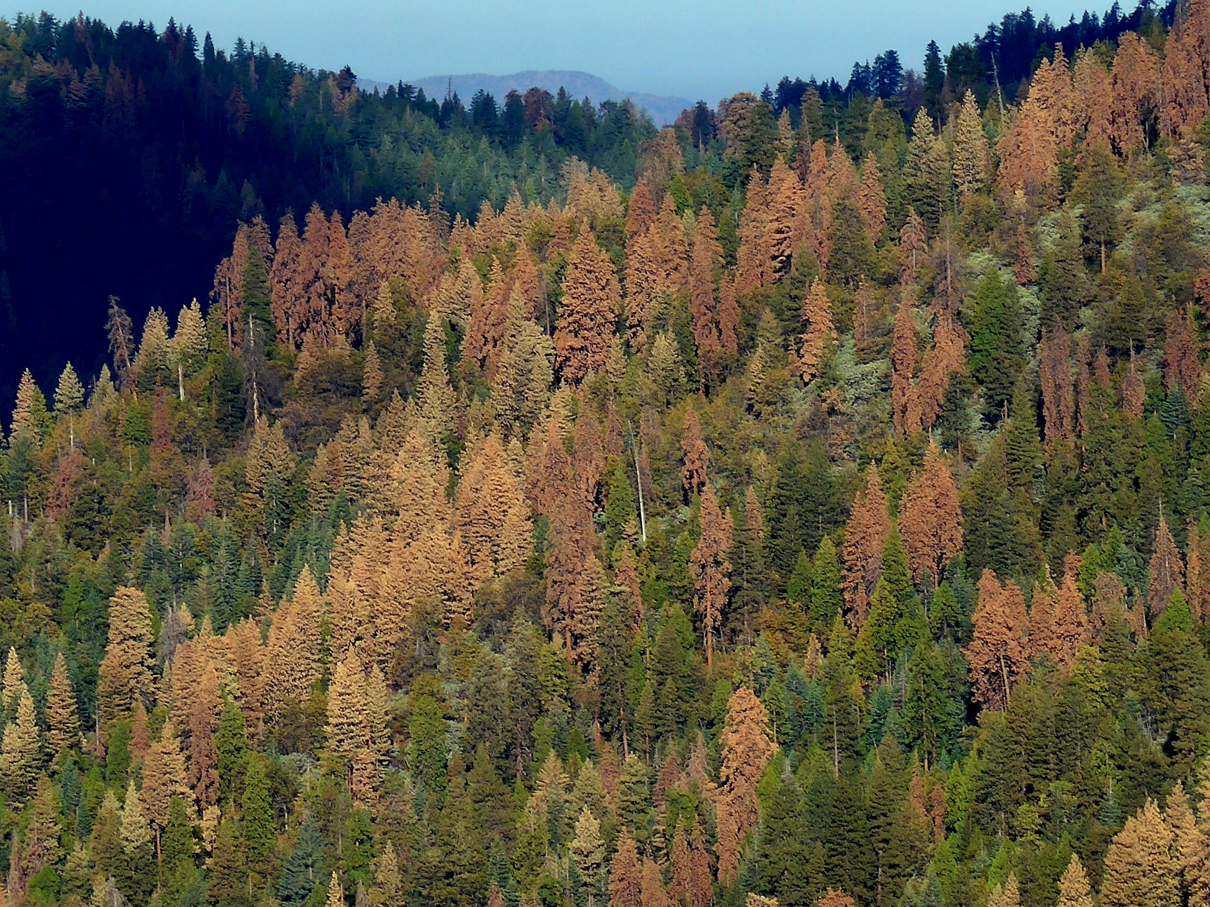 Forests Fourth National Climate Assessment